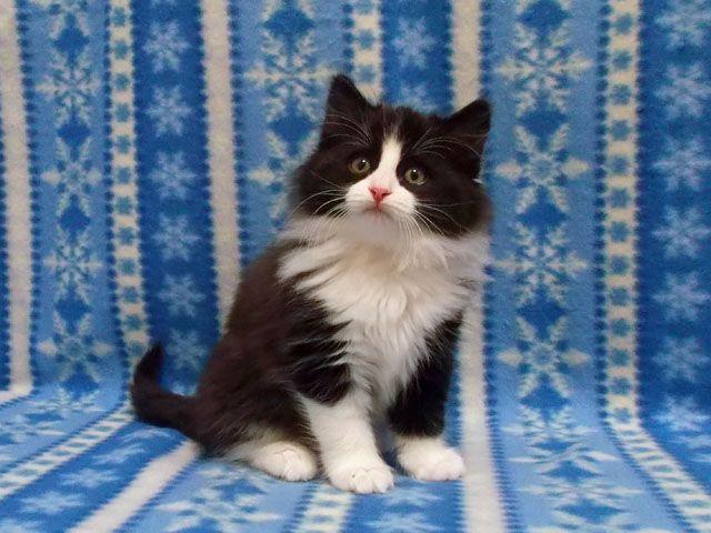 ID:1503,00007の子猫
