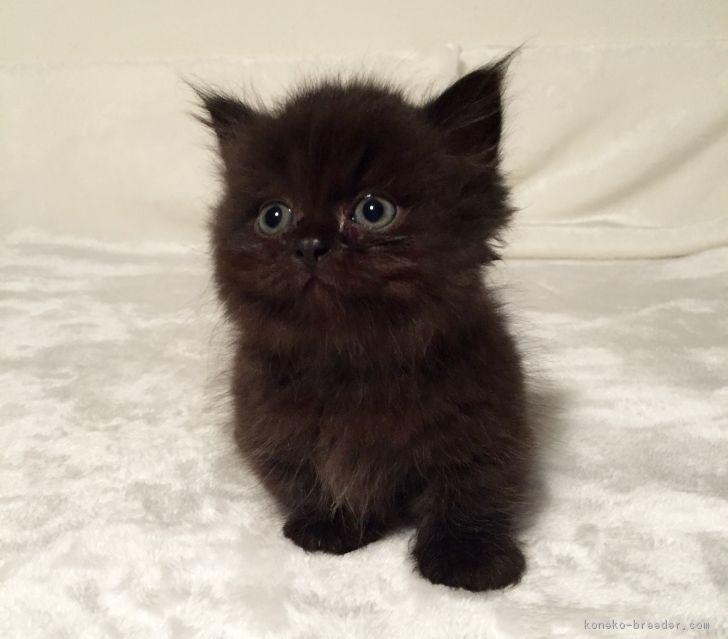 「黒猫」を含む猫の里親募集情報 - pet-home.jp