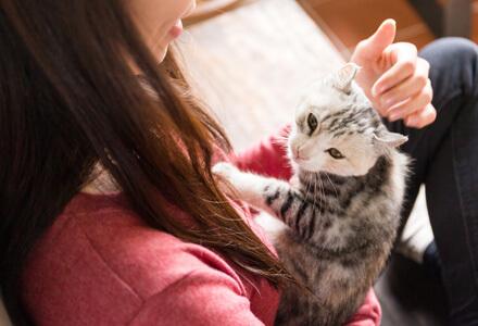 猫 ペット ショップ 里親 売れ残り