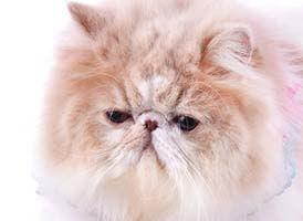 猫 の 種類 おとなしい 猫の種類!性格がおとなしい猫種とは?