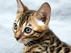 全猫種でお客様の声(口コミ・評判)1.3万件突破