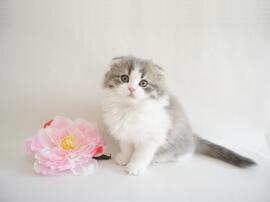 全猫種でお客様の声(口コミ・評判)2万件突破
